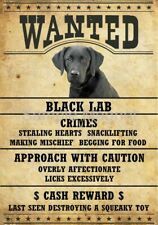 "Black Labrador Retriever Lab Wanted Poster Fridge Dog Magnet Large 3.5"" X 5"" #2"