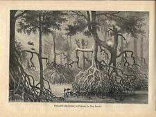 Stampa antica PANAMA la foresta pluviale 1886 Old antique print