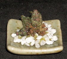 Dollhouse Miniature Peggy Tucker Potted Plant 1:12Unknown Potter OOAK 9079 Patio