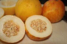 Vine Peach melon - Mango melon - 5+ seeds - Heirloom - YIELDING!