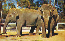 Vintage SAN DIEGO ZOO California INDIAN ELEPHANTS LM-2 Color Postcard UNUSED
