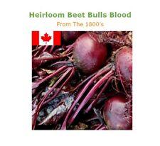 Beet Seed : BULLS BLOOD Beetroot 75+ Seed Heirloom