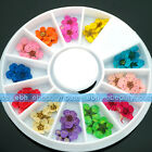 12 Colors Dry Flower Dried Nail Art Tips Decoration Manicure + Wheel #EB-158