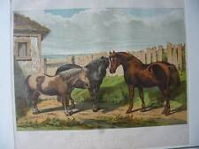 Originaldrucke (1800-1899) mit Zoologie und Lithographie