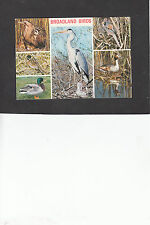 Postcard - Multiview of Broadland, Norfolk Birds