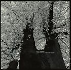 DUX Orchestra-Mats Gustafsson/Susie Ibarra/Dave Sewelson/jc morrison -- NEW LP