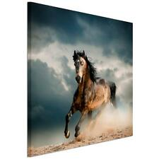 HUGE 50cm*50cm Abstract Horse Canvas Prints Wall Art Painting Picture Unframed