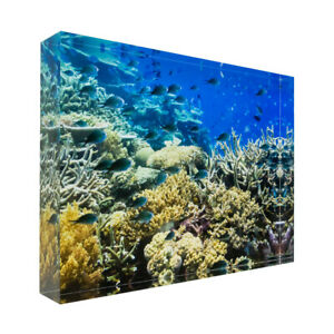Fish on tropical coral on Great Barrier Reef Acrylic Block Photo Print 0911