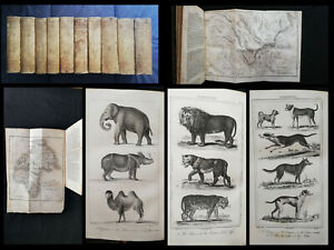 1833-1834 BUFFON - OEUVRES COMPLETES - 20/20Tomes/10Vol - 202 planches.! In-8.
