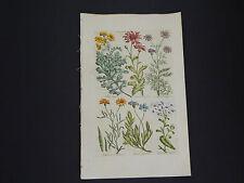 Sir John Hill, Botanical, The Vegetable System 1761-1775 Seggrom #17