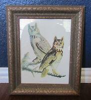 Vtg Audubon Framed Print Great Horned Owl 70s