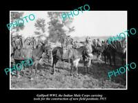 OLD LARGE HISTORIC MILITARY PHOTO WWI GALLIPOLI THE INDIAN MULE CORPS c1915