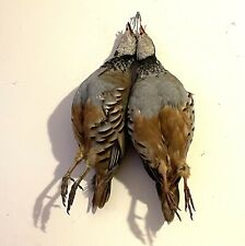 More details for vintage farmed hanging partridge taxidemy alectoris rufa