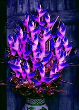 20 Pcs Rare Heliconia Plants Edible Beauty seeds.#273