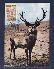 cma/ carte maximum France  cerf  Sologne  Romorantin      1975