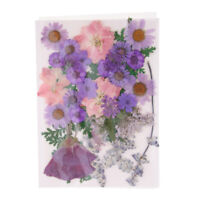 13//14//15x Real Press Dried Flowers Leaves For DIY Epoxy Resin Jewelry Making