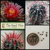 20+ FIRE BARREL CACTUS SEEDS (Ferocactus gracilis) Red Flower Desert Cacti