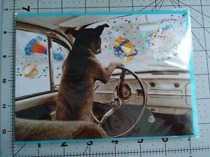 Papyrus Happy Birthday - Dog Driving Car Hazardous Birthday