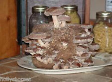 Shiitake Mushroom Log Kit *READY TO GROW*  Made In USA