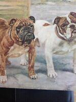 K1-8 Ephemera 1930s Picture Book Plate Bull Dogs Mastiffs