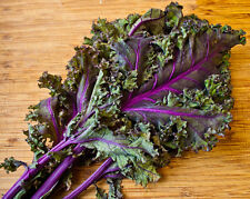 Kale, RED RUSSIAN, 100 Heirloom, Non-gmo, gluten free Seeds  - FREE SHIPPING