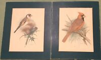 "Vintage Bird Prints (2) 8 X 10"" Matted Nice Color! Paper Thin Estate Find"