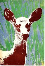 Deer Lithographed at Packsack Press Winton MN 1975 Vintage Postcard