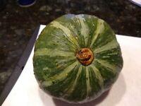17 Fresh Kabocha Squash Seeds Japanese Pumpkin US Seller