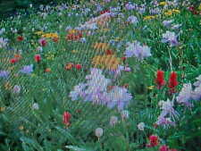 ONE POUND BUTTERFLY HUMMINGBIRD 15-VARIETY WILDFLOWER SEED MIX  + 1/8-POUND FREE