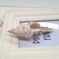 5-10 cm Natural Long Spiral Shells Wedding Beach Fish Tank Nautical Decor Crafts
