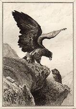 EAU FORTE / Fables de la Fontaine 1883 / L'AIGLE ET LE HIBOU