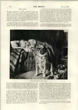 1896 Abrahams Offering Teniers The Younger Babies First Friend Eugen Felix