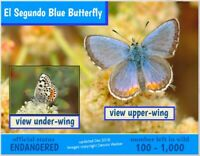 The El Segundo Blue, an Endangered Species card by Postcards To Save The Planet