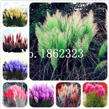 Hot Selling! 600 Pcs Pampas Grass Seeds Plantas Garden Ornamental Plants