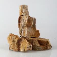 Natural Petrified Wood Stone for Bonsai Fish Tank Aquarium landscaping