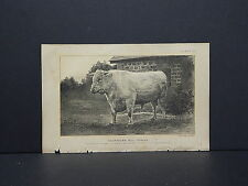 "Cows Bulls Cattle Dairy Farming 1888 Engraving #103 Shorthorn Bull ""Foscoe"""