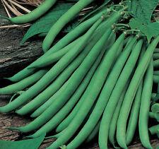 DWARF FRENCH BEANS SEEDS (Phaseolus vulgaris) Hybrid Vegetable Seeds - 30 Seeds.
