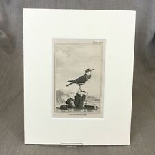 Ringed Plover Bird Antique Engraving Print Buffon Natural History 1812