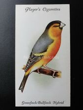 No.17 GREENFINCH BULLFINCH HYBRID - Aviary and Cage Birds by John Player 1933