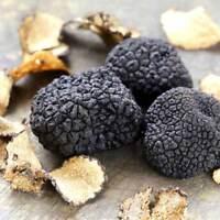 Tuber Melanosporum BLACK Truffle Mycelium/Spawn Mushroom Seeds Fungus 10 g