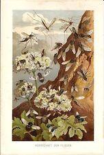 Stampa antica INSETTI API MOSCHE LIBELLULE FRA I FIORI 1891 Antique print