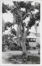 Famous Sausage Tree, The Tropic Gardens, Coral Gardens FL Real Photo RPPC unused