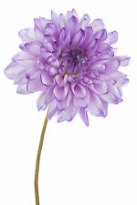 BEAUTIFUL PURPLE FLOWER CANVAS PICTURE #21 STUNNING FLORAL HOME DECOR A1 CANVAS