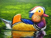 Watercolor Painting Colorful Feathers Mandarin Duck Bird ACEO Art .