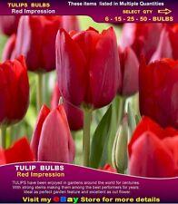 Flower Bulbs-TULIP  BULBS* Red Impression *10x  BULBS
