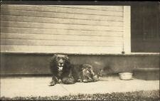Cute Spaniel Dog by Steps - Water Bowl c1915 Real Photo Postcard