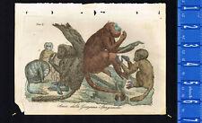 Monkeys of Spanish Guyana, 1828 Antique Hand-Colored Print