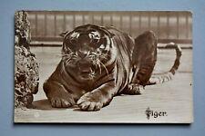 R&L Postcard: Tiger in Zoo/Captivity by Valentine