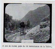 1924  --  ANDORRE  A DOS DE MULET LE LONG DE  LA VALIRA