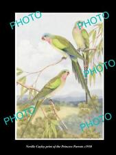 NEVILLE CAYLEY VINTAGE PRINT OF AUSTRALIAN BIRDS, 16x11, THE PRINCESS PARROT
